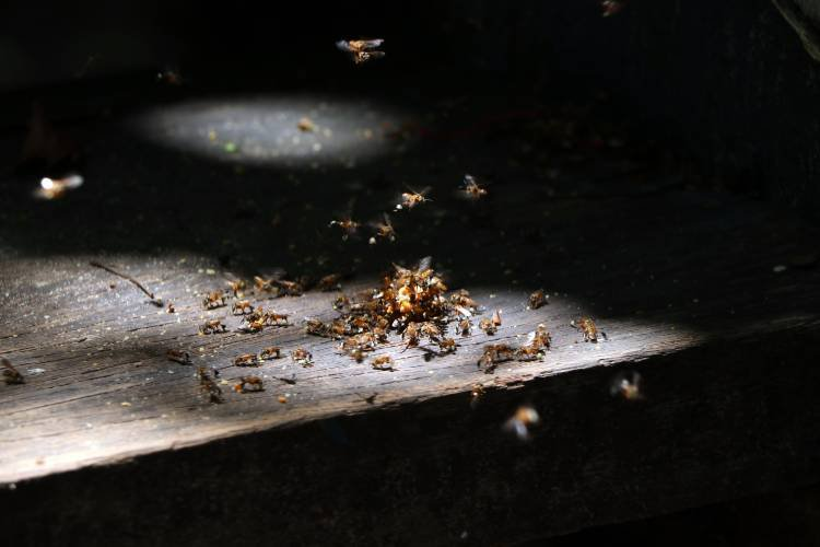 Diferencia entre termitas y carcoma
